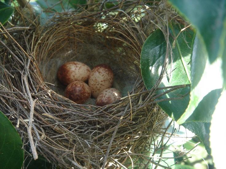 red bird nest and - photo #1