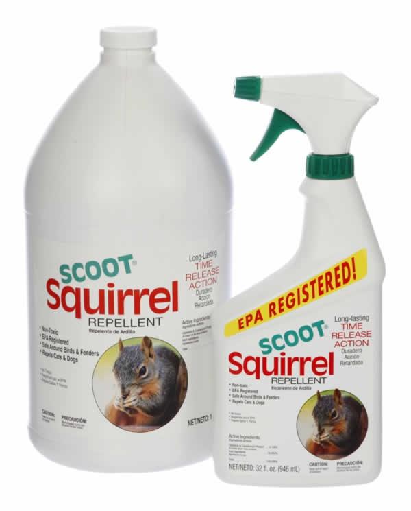 Scoot Squirrel Repellent Outdoors Pinterest