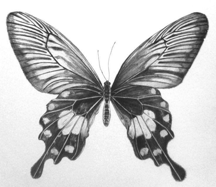 Butterfly drawings in pencil step by step