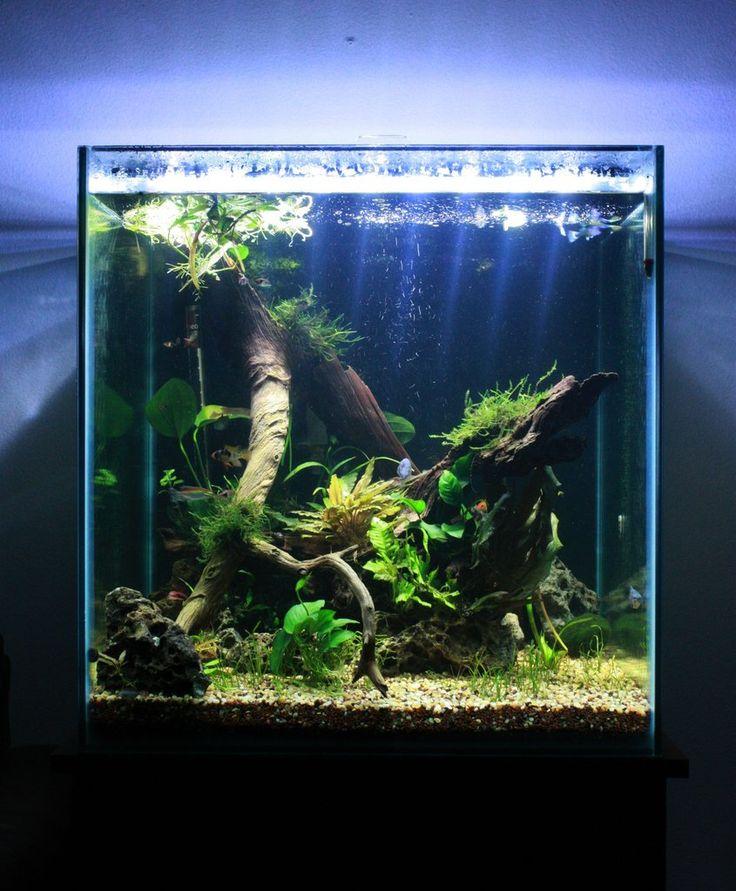 60gal cube aquarium envy pinterest for Aquarium cube