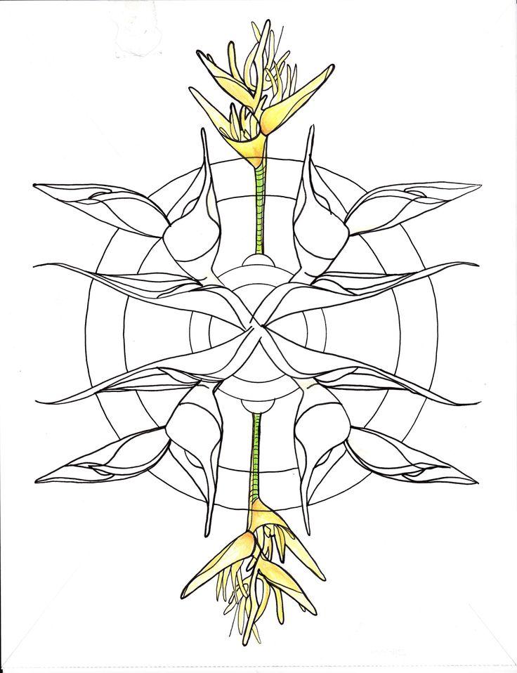 Line Drawing Mandala : Line drawing haliconia mandala drawings pinterest