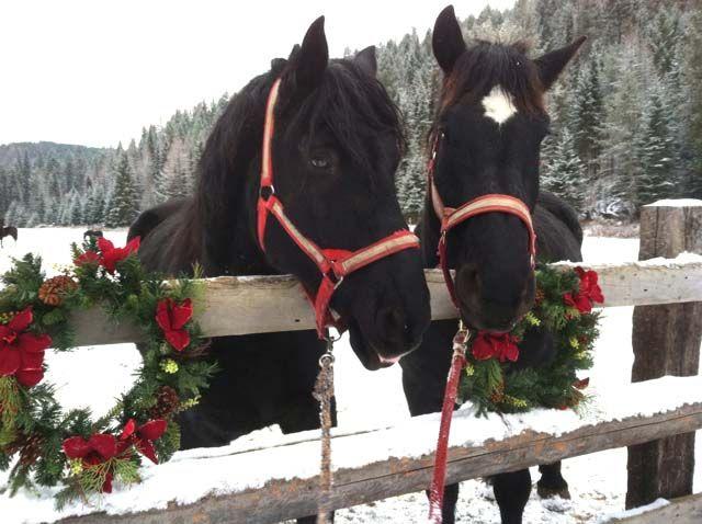 Годината на коня 2014