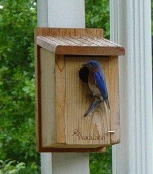 Audubon Cedar Bluebird House Heart 39 S Desires Pinterest