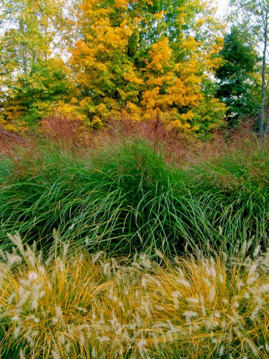 Landscaping Ideas Using Grasses : Ornamental grasses get ideas on using in the landscape