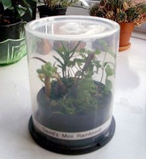 CD spindle case terrariums are a great green reuse project. Make your own mini biosphere for the office.