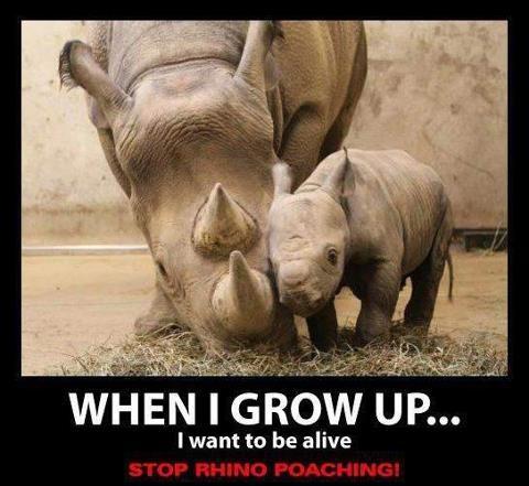Stop Rhino Poaching   Animal rights   Pinterest