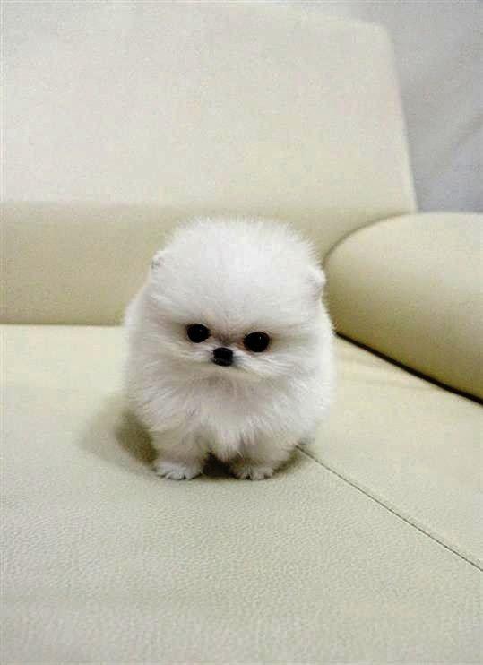 Most beautiful dog breed - photo#9