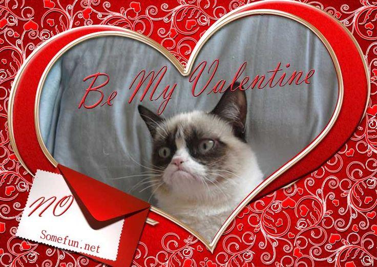 happy valentine cat