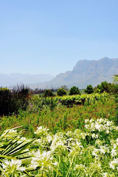 Stellenbosch South Africa  City pictures : Stellenbosch, South Africa | lark&linen | Travel Photography | Pinter ...