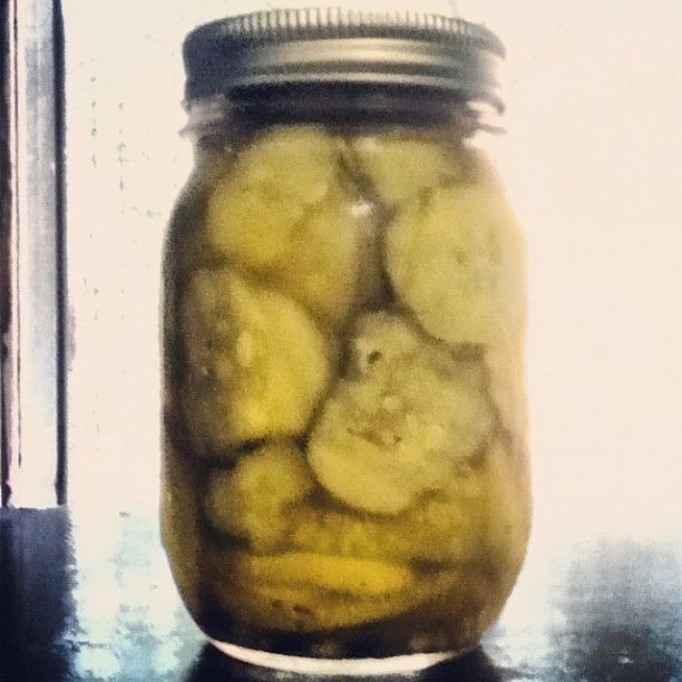 Homemade Kosher Dill Pickles I have always loved pickles. Something ...