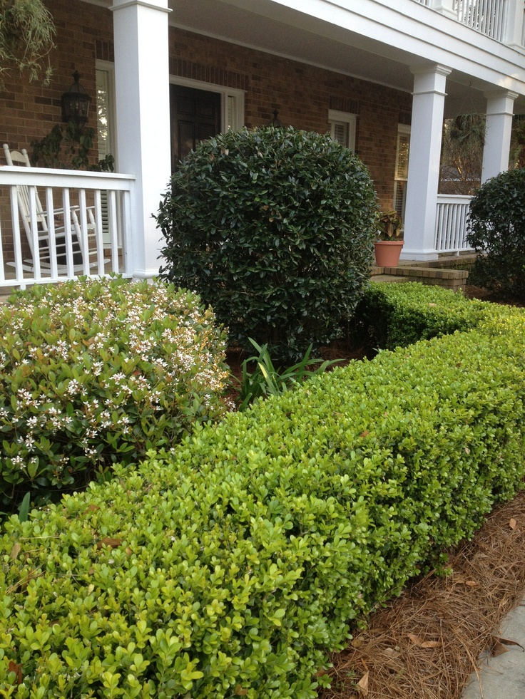 Boxwood Hedge Front Of House And Wall Outdoors Pinterest