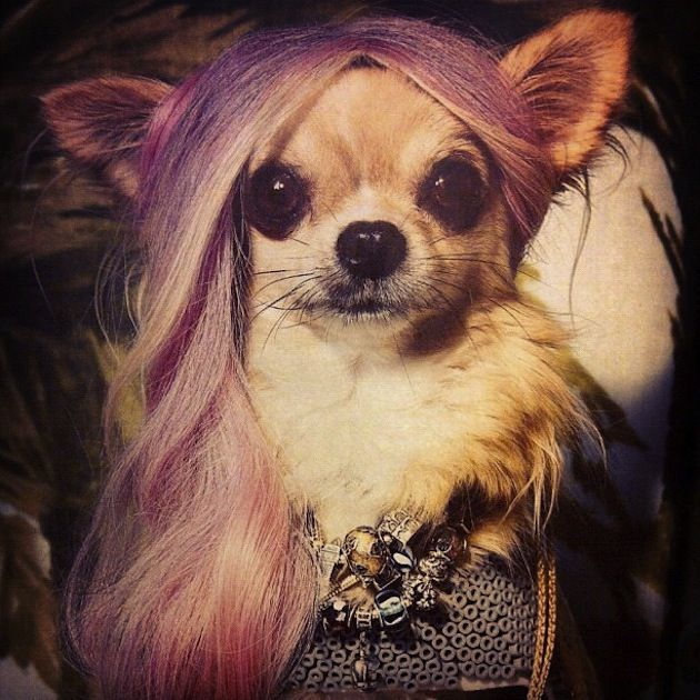 Wiggles Pet Wigs 57