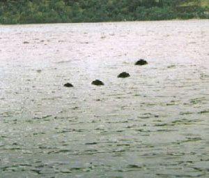 Lake Murray Water Monster