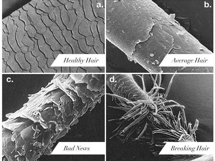 Damaged human hair under microscope - photo#10