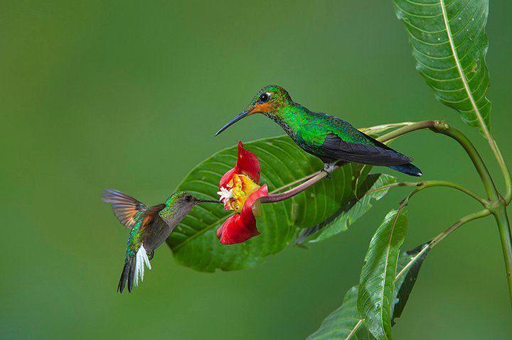 Hummingbirds, gorgeous