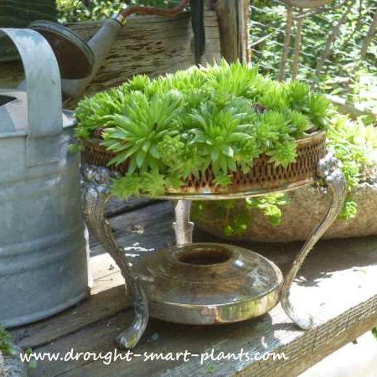 unique succulent planters