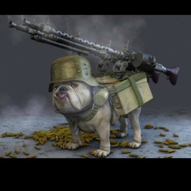 Devil Dog!! | All things...Marine Things...Semper Fi | Pinterest