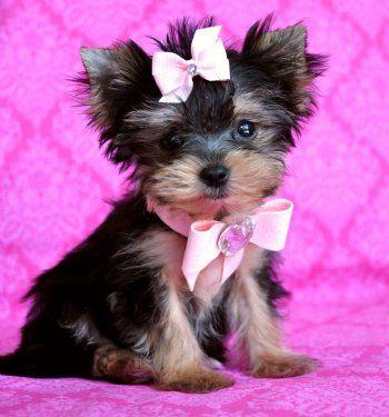 Ένα γλυκό σκυλάκι...