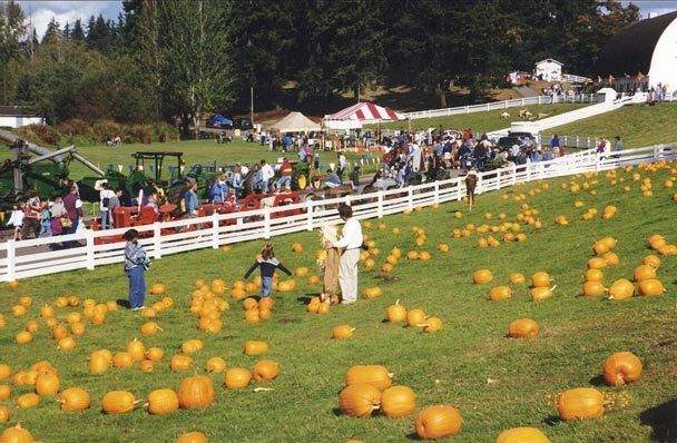 Kelsey Creek Farm Fair recalls Bellevue's rural past - features pumpkin decorating, hayrides and other fall activities