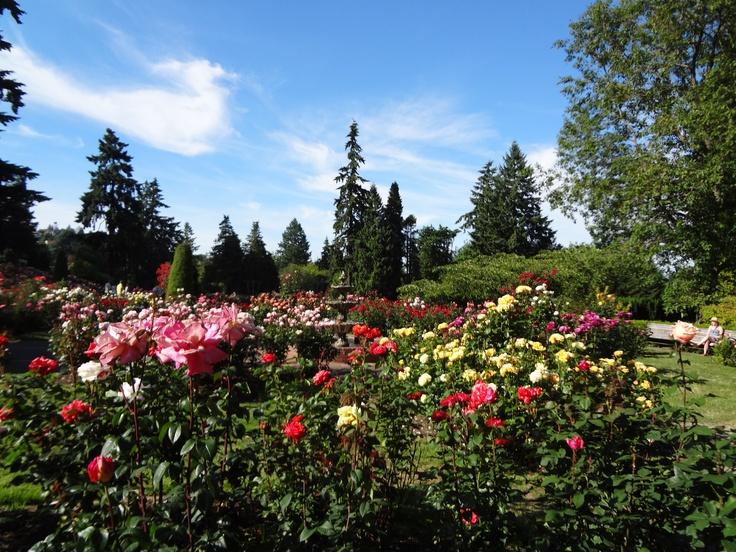 Portland Or International Rose Garden White Gold