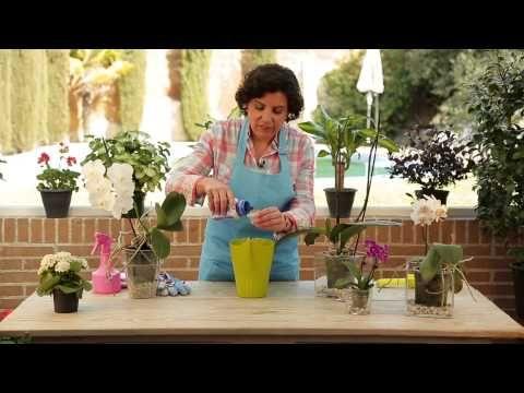 Cuidado de la orqu dea diy home garden pinterest - Como cuidar orquideas en maceta ...
