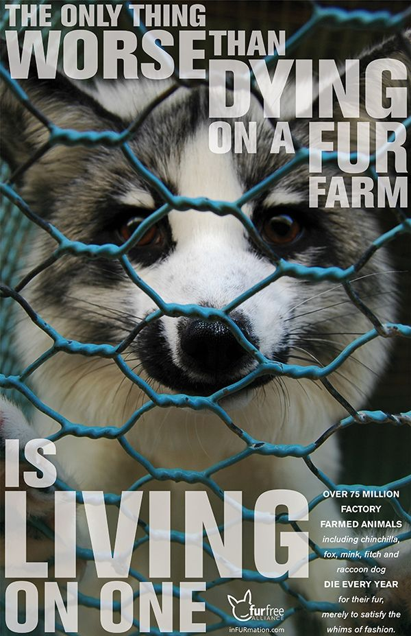 Just think of these animals, who live their life in fear, in pain, in CRUELTY. You may not be able to stop fur farms, but you can stop buying from them. Boycott these horrific places. If no one buys from them, they'll go out of business, and the animals can be free.