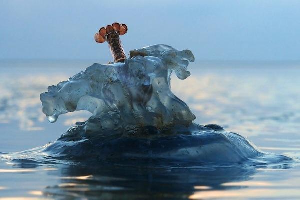 lobster dive | inspire me please. | Pinterest