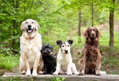 peer reviewed articles on dog behavior