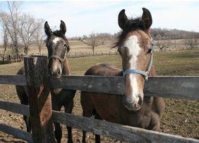 Skyrock Horse Farm