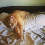 Instagram photos for tag #lovetocuddledown | Statigram