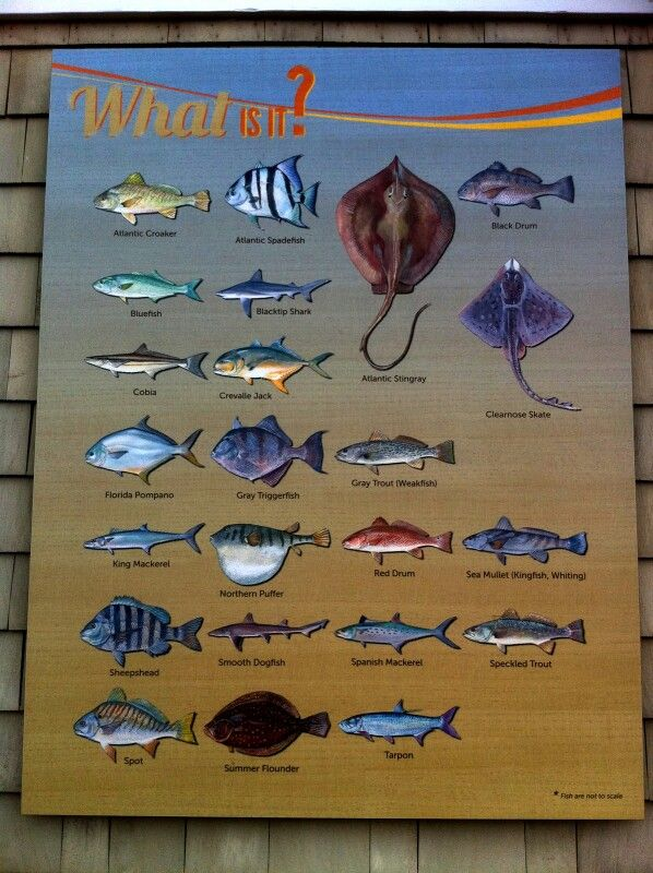 Pin by sarah herrington on my home my heart the beach for Fishing outer banks nc