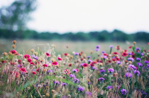 Pink and purple flowers in field