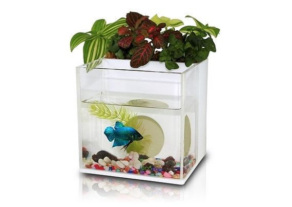 a dialogue between flowers and fish aquarium planter fish