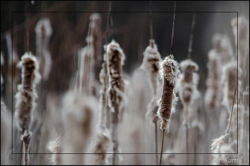 Gary P Kurns Photography's photostream