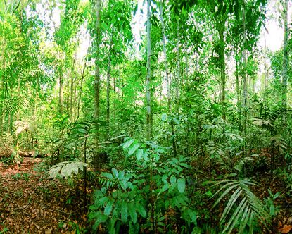 jungle green | Central America Jungle | Pinterest