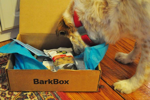 Bark Box subscription gift service