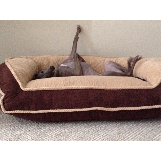Dog Dog Bed Couch Italian Greyhound Iggy Pinterest