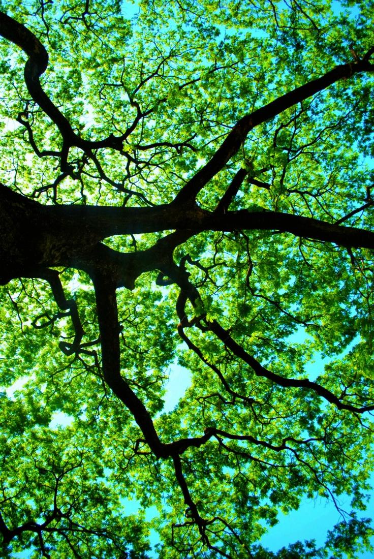 Tree canopy inspiring art 2 pinterest for Canopy of trees