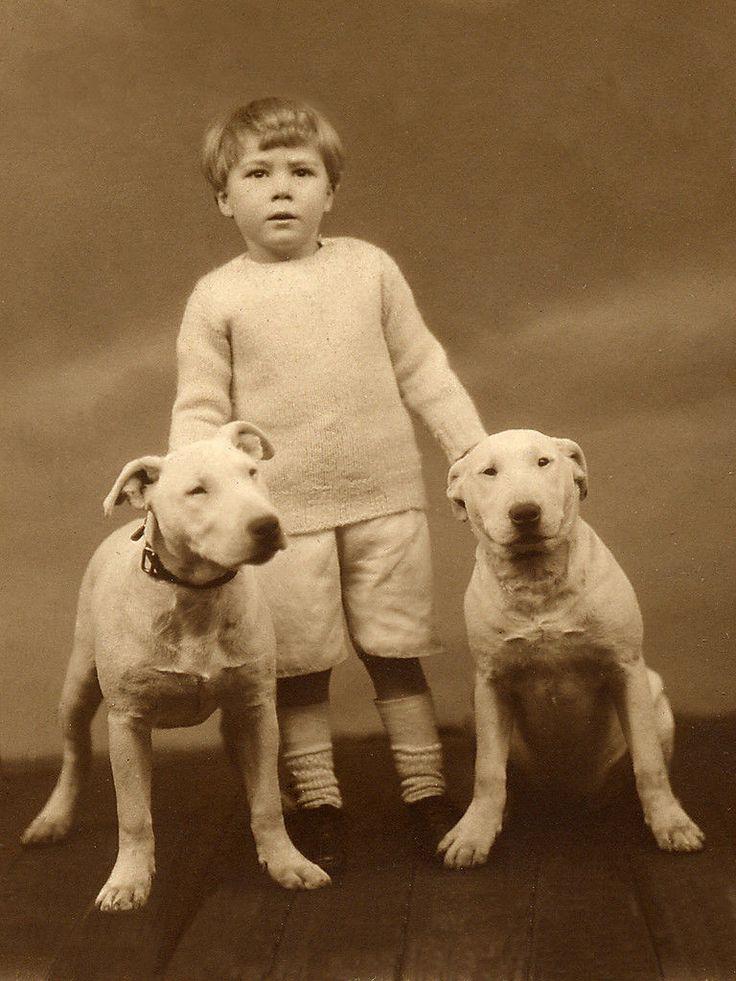 Ретро фото собак.  4d15b9575aba87e714865c1e847ac7ca
