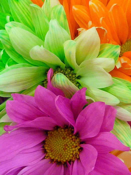 Multi colored flowers flowers gardens pinterest for How to make multi colored flowers