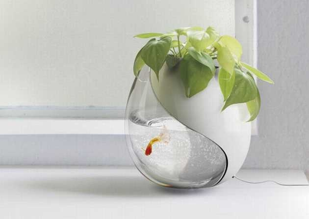 Betta Fish Bowl Aquarium Pinterest