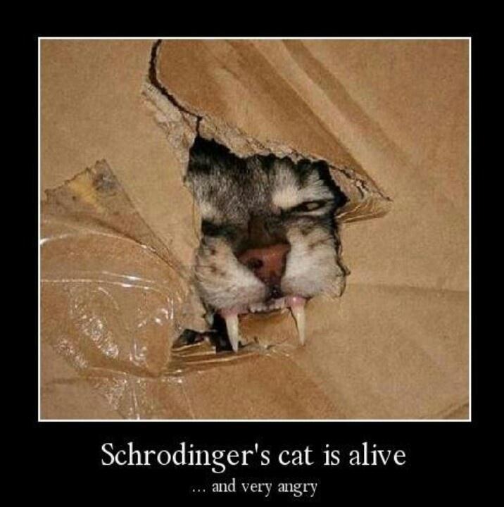 Schrodinger's cat | Funny | Pinterest