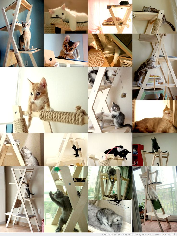 Modern Cat Furniture Kitty Cat Stuff Pinterest