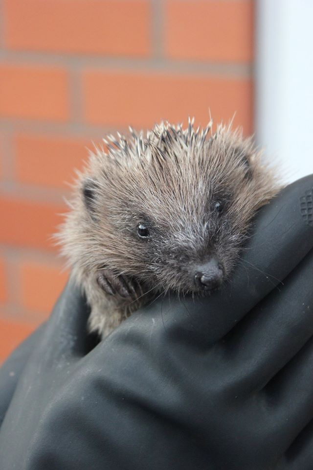 Hedgehog Rescue Centre