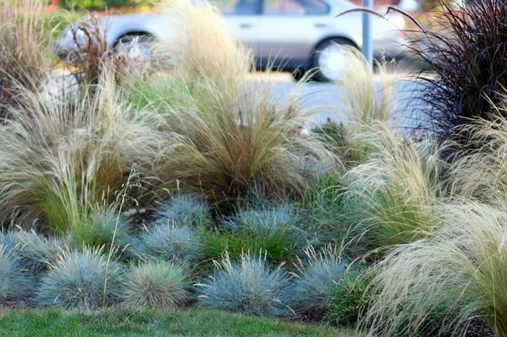 Ornamental grass landscaping garden fence bank pinterest for Ornamental grasses design plans