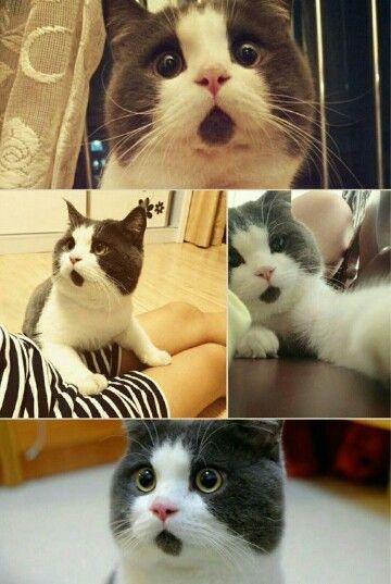 Cute grumpy animals