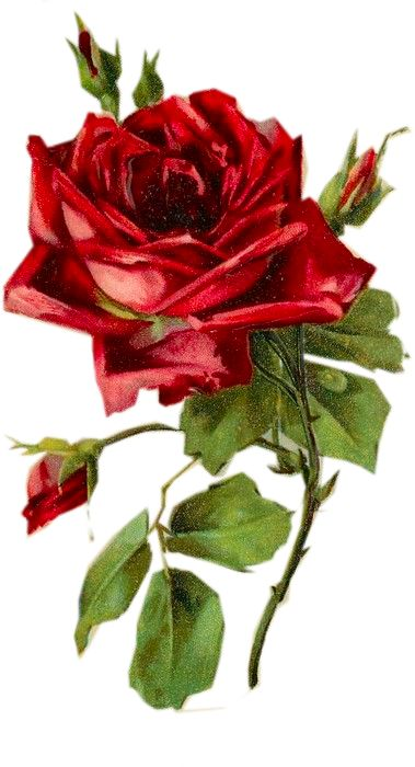 Vintage Rose ~ Valentine Altered Art Project