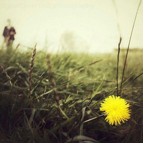 Avebury Field Flower