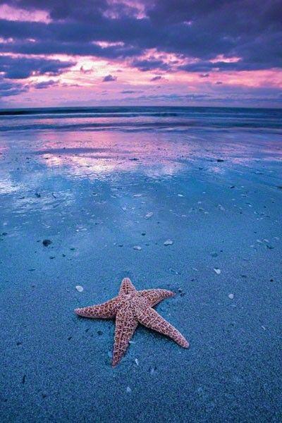 Starfish on the beach | Things I love | Pinterest