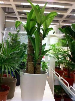 Top 10 easy indoor plants gardening pinterest - Easy to take care of indoor plants ...